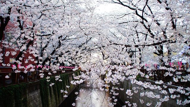 【 民泊 】ゲストに教えたい、東京お花見スポット10選ご紹介(5位~1位編)