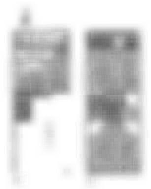 目黒・恵比寿徒歩圏 戸建 4SLDK☆230平米【民泊 物件】民泊(airbnb)可能物件 目黒駅・恵比寿駅
