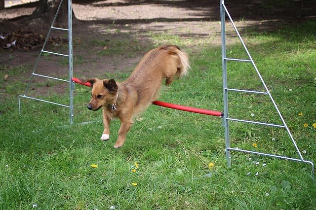 small-dog-1406298_640