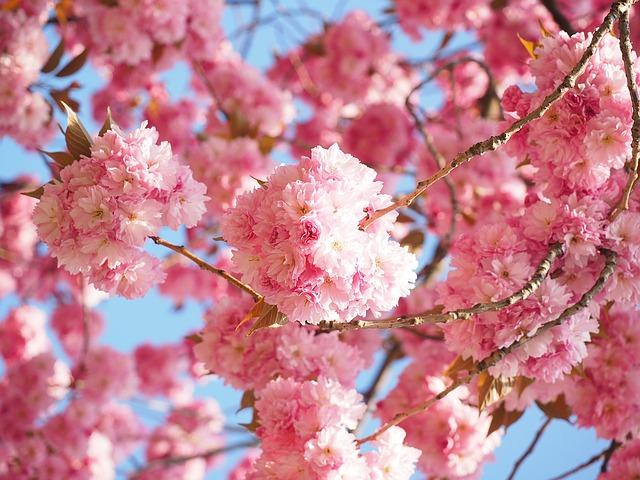 お花見シーズン到来!2月度民泊のはじめかたセミナーご感想紹介