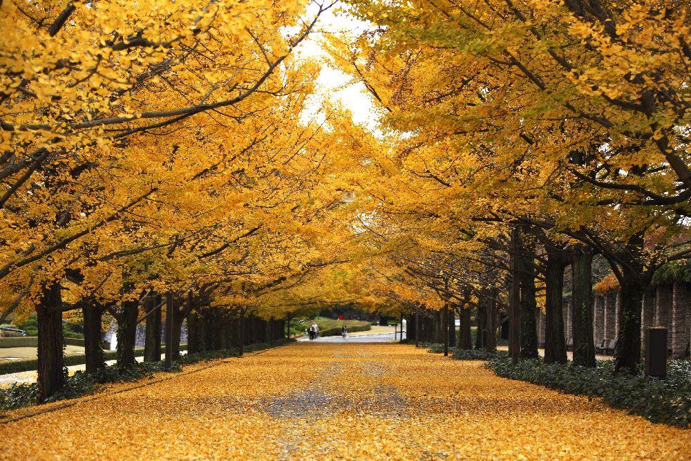 10月・11月 合法民泊セミナー開催!!