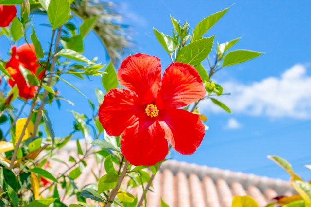 【設備込み&宿泊施設にリフォーム済み!】沖縄で別荘兼民泊オーナーになりませんか?